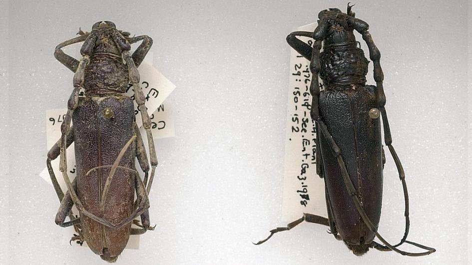 4,000-year-old beetle likely to return home due to global warming