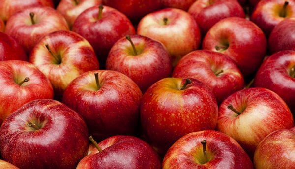 Jumla sees major drop in apple production