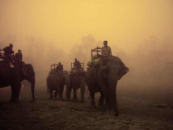 Elephants getting displaced from Chitwan National Park