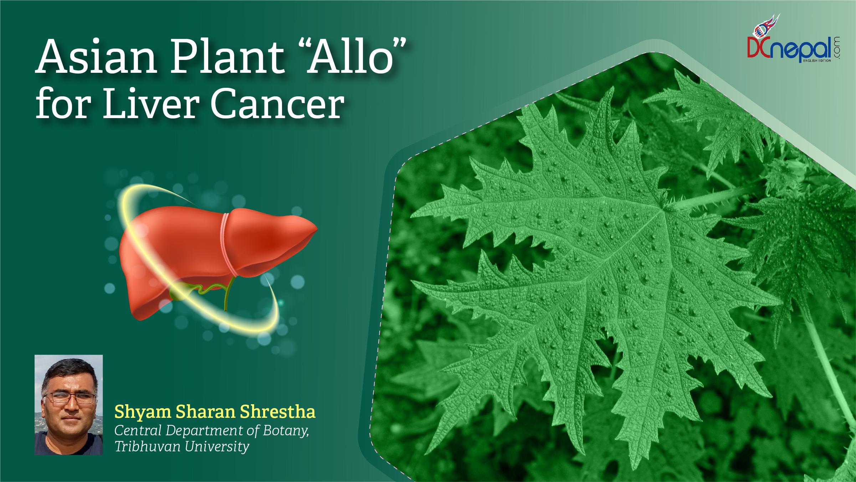 Asian Useful Plant Girardinia diversifolia (Allo) for HepatoCarcinoma