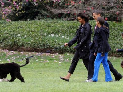 Barack Obama's family dog, Bo dies