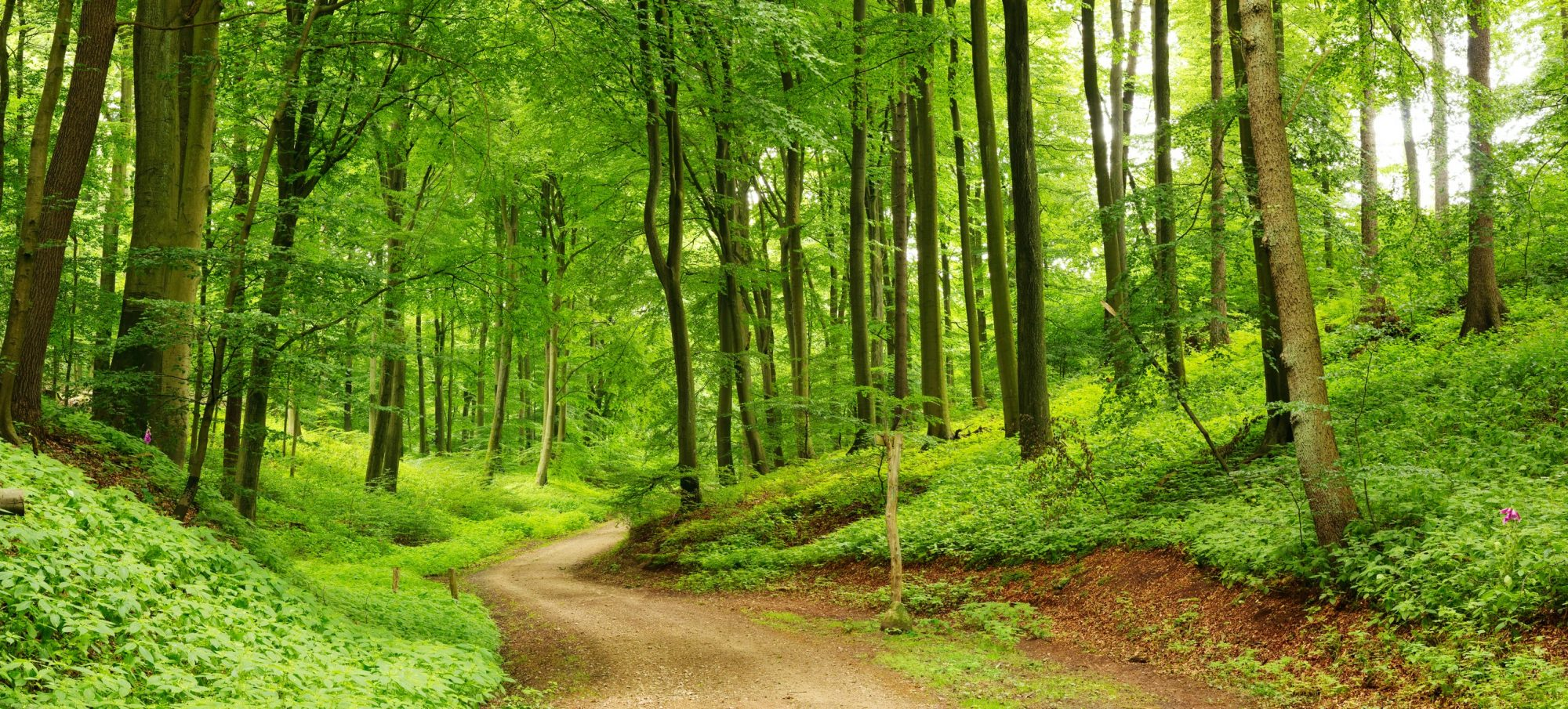 Forests the size of France naturally regrown around the world, study says