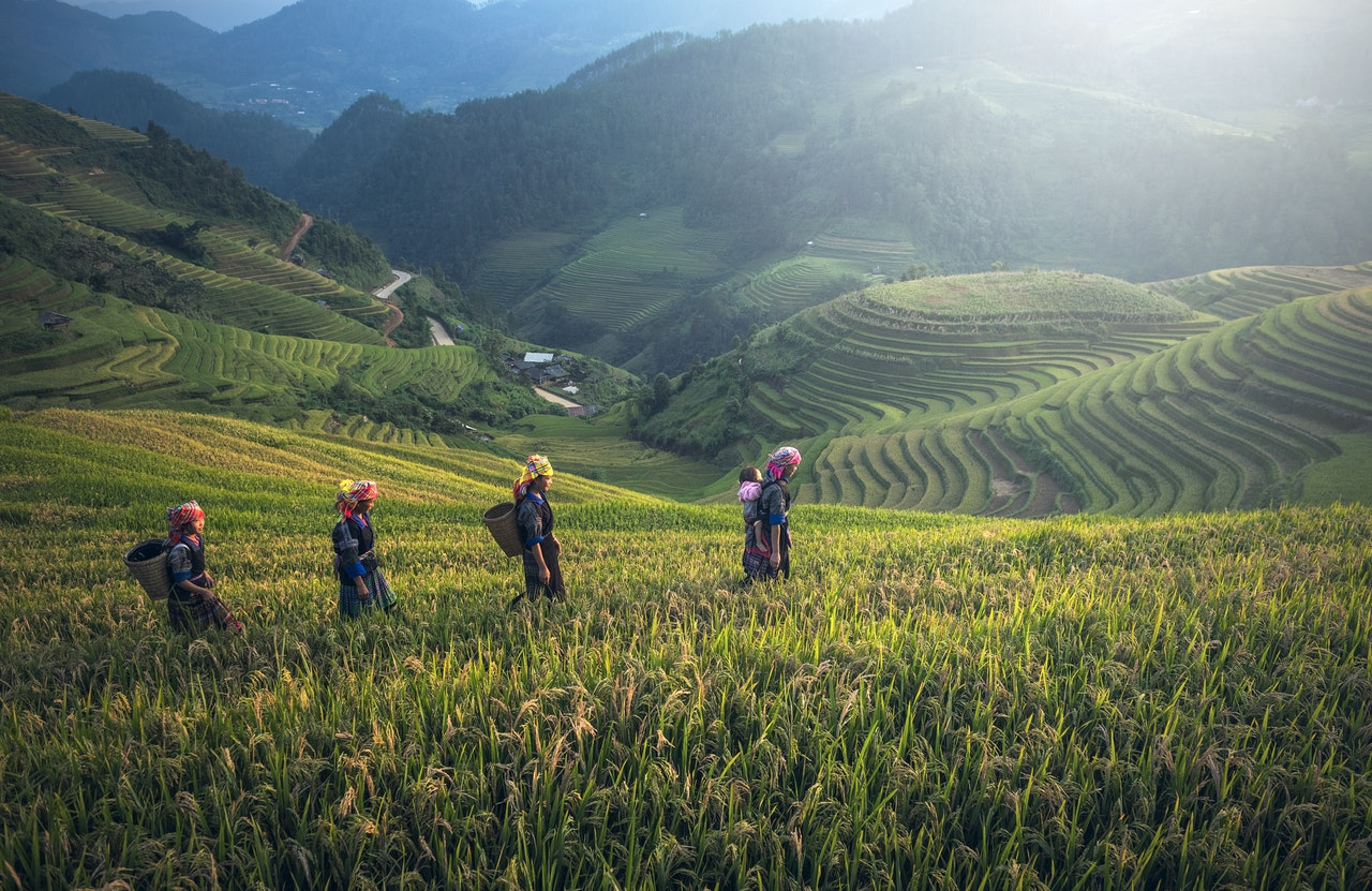 Dubbed an 'agricultural country', Nepal lacks Agriculture Act