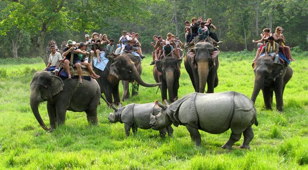Chitwan National Park opens for tourists after five months