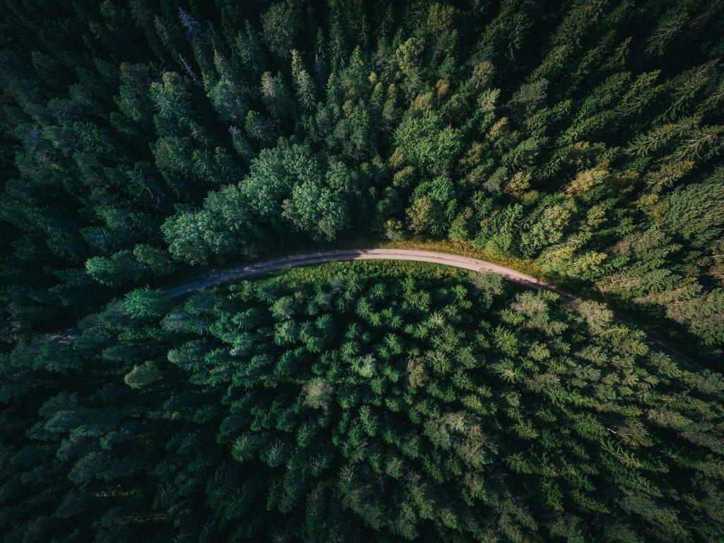 Government allows deforestation along Muglin-Pokhara highway