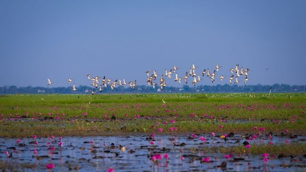 Bhawanipur Wetland area emerges as new hang out in Itahari